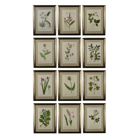 Set of Elizabeth Blackwell Botanical Engravings WD6016046