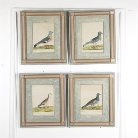 Set of Four Dove Prints by Eleazar Albin WD8815670