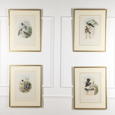 Four Hand-Coloured Bird Prints by Gould WD8815707