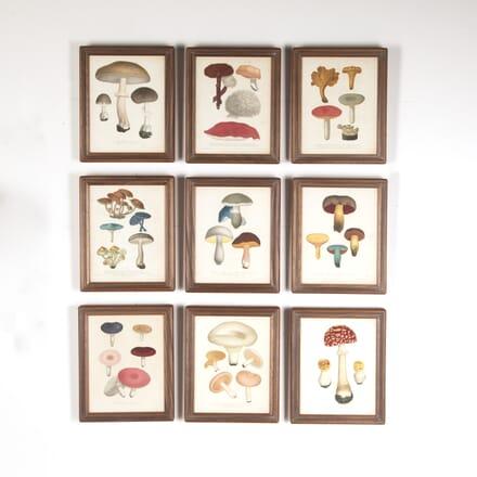 Set of Nine 19th Century Engravings of Mushrooms WD7613715