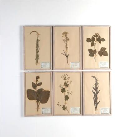Set of Six Herbariums DA6811080