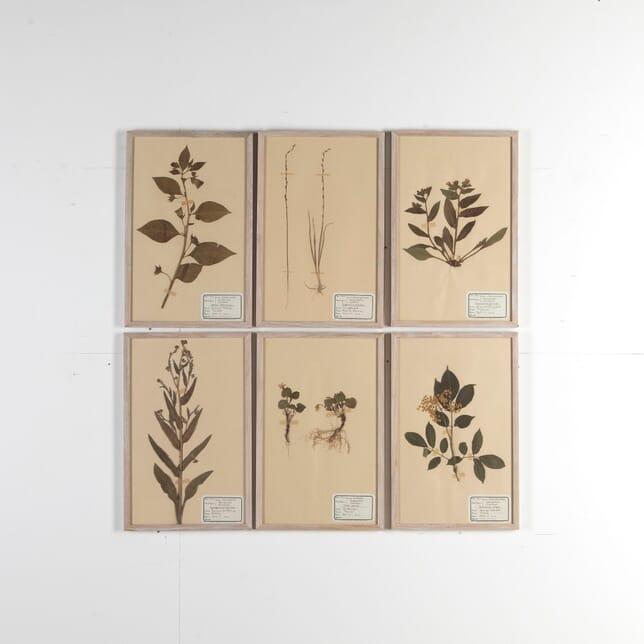 Set of Six Herbariums DA6811081