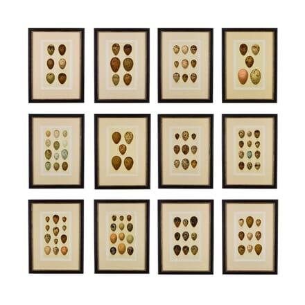 Set of Twelve 19th Century Chromolithographs of Eggs WD6014654