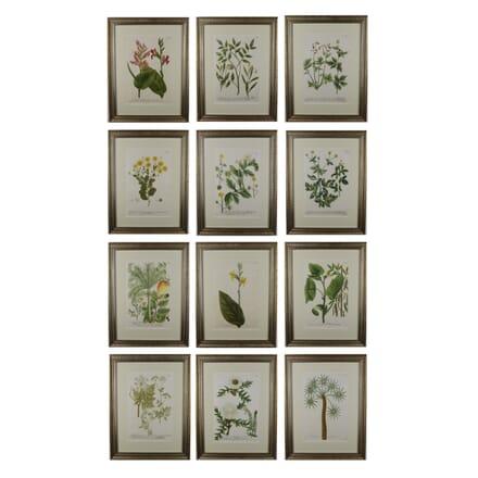 Set of 12 Botanical Engravings by Weinmann WD6016043