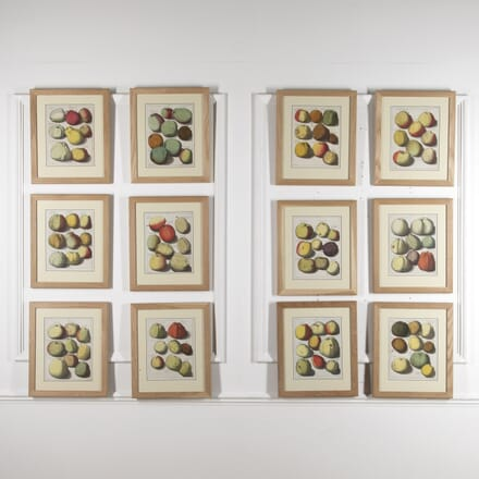 Set of 12 Apple Engravings by Johann Knoop WD8815671