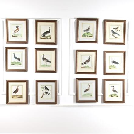 Set of 12 Bird Prints by Martinet WD8815672