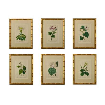 Set of Six 19th Century Botanicals by Bessa WD6014656