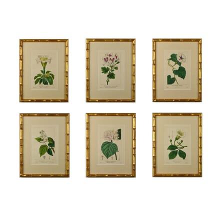Set of Six 19th Century Botanicals by Bessa WD6014656