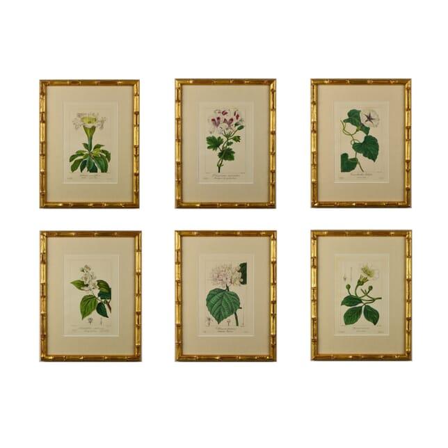 Set of Six 19th Century Botanicals by Bessa DA6014656