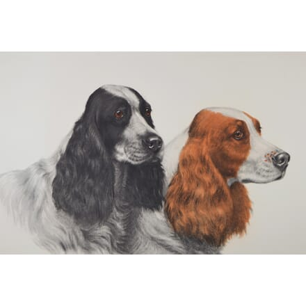 Springer Spaniels Engraving by Danchin WD6014856