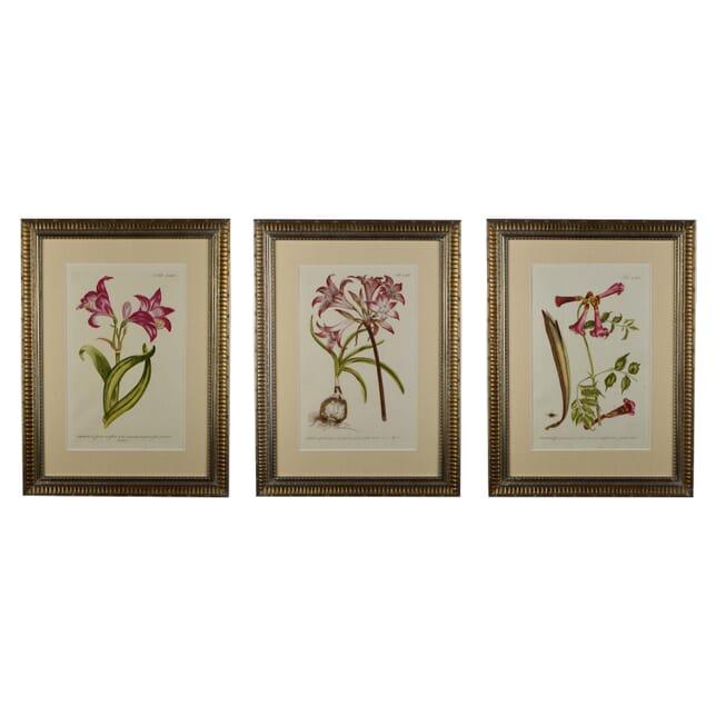 Three 18th Century Philip Miller Prints WD6014657