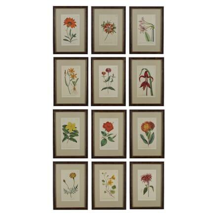 Set of 12 18th Century Curtis Botanical Prints WD6016041