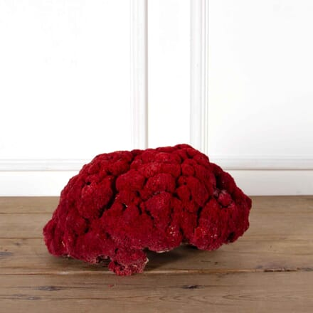 Large 19th Century Red Coral DA518216