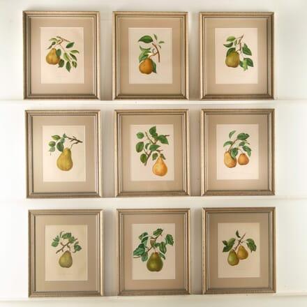 Nine 19th Century Pears WD608439