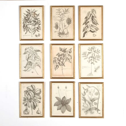Set of Nine 18th Century Copperplate Botanical Engravings WD618865