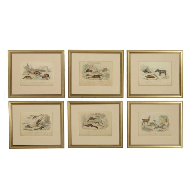 Set of Six Hand Coloured Lithographs WD308254