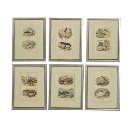 Set of Six Hand Coloured Lithographs WD308255