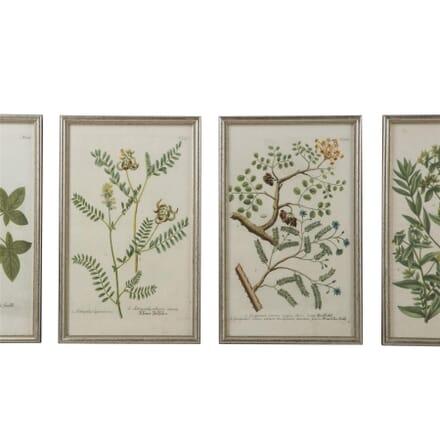 Set of 18th Century Botanical Engravings by Johann Wilhelm Weinmann WD6159843