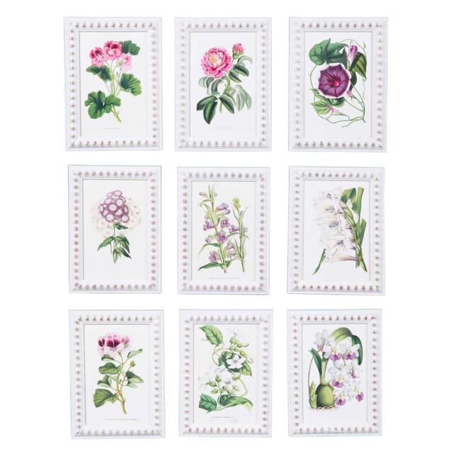 Set of Flower Prints by Louis Van Houtte WD6058335