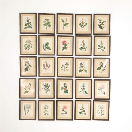 Twenty-Five Botanical Prints WD607744