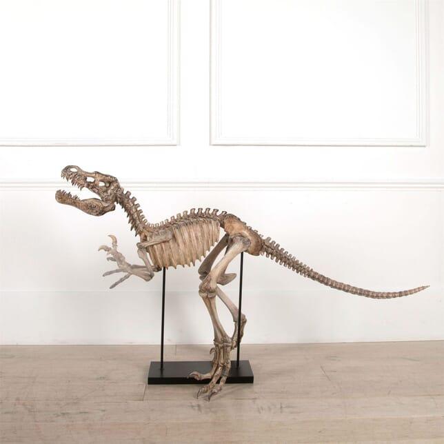 Model of a Young T-Rex Skeleton DA2561520