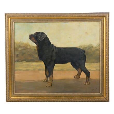 20th Century Rottweiler Portrait WD137739