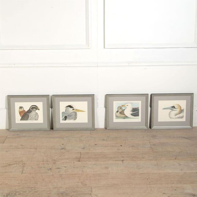Rare Set of Four Blackburn Birds Lithographs WD6061332