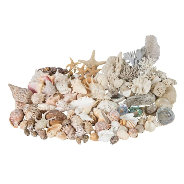 Extensive Collection of South Sea Island Shells and Coral DA0157818