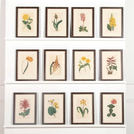 Twelve 19th Century Curtis Botanicals WD6062364