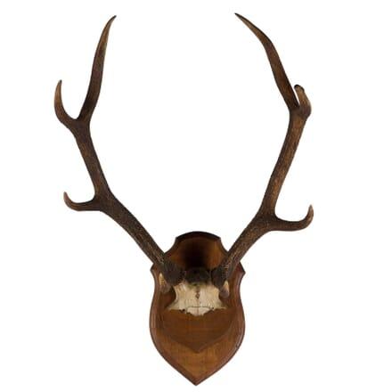 19th Century Antlers DA107501