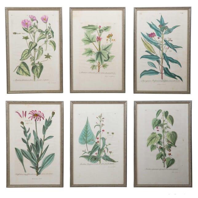 6 Original Engravings by Johann Jakob Dillenius WD6158122