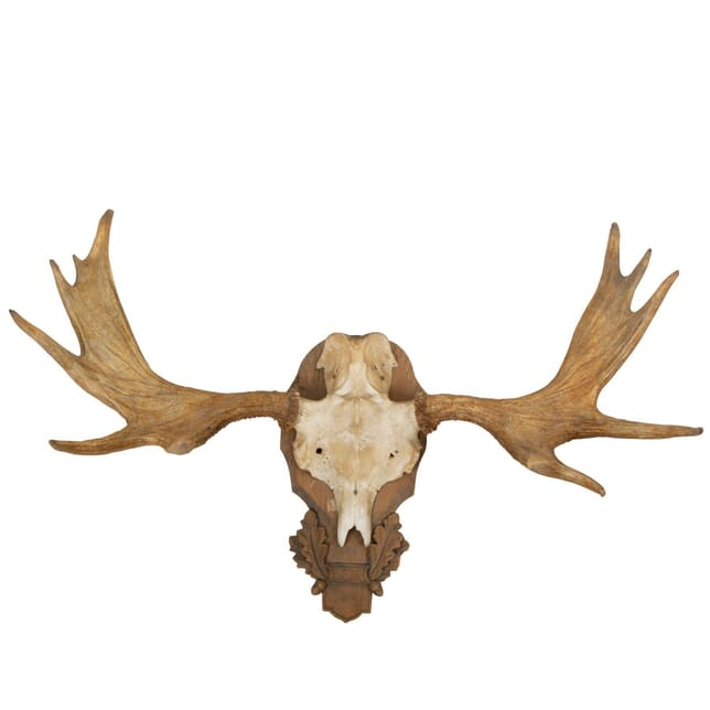 Mounted Elk Horn DA9960763