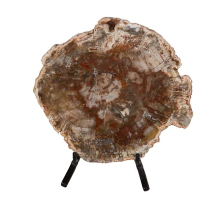 Petrified wood section DA289176
