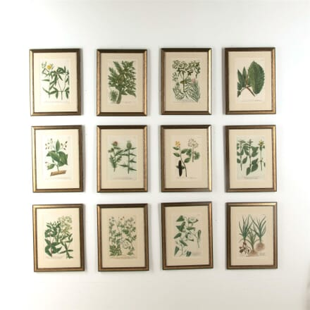 Twelve Weinmann Botanical Engravings WD607743