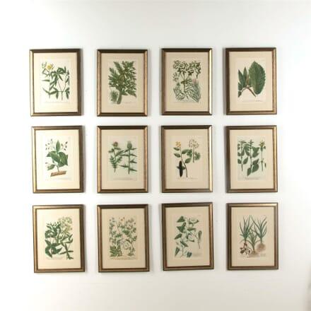 Twelve Weinmann Botanical Engravings WD607743