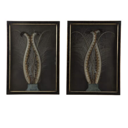 Pair of Lyrebird Feather Pictures WD2959977