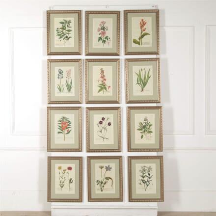 Set of Twelve 18th Century Botanical Engravings By Georg Wolfgang Knorr WD607004