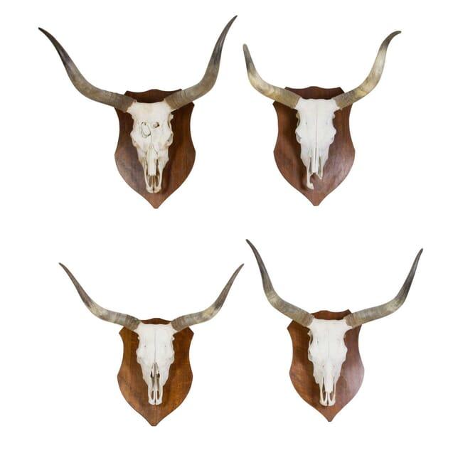 Pair of Large Mounted Skulls DA4011668