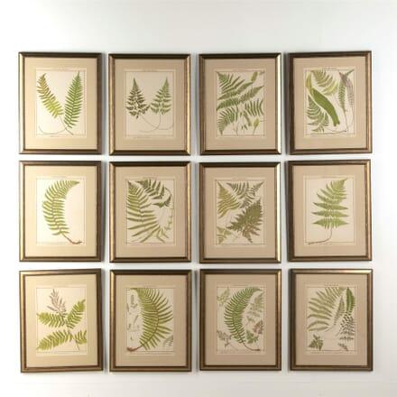 Twelve Botanical Prints WD607742