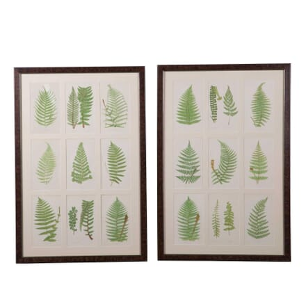 Set of Eighteen Hand Coloured Ferns by E J Lowe WD6059189