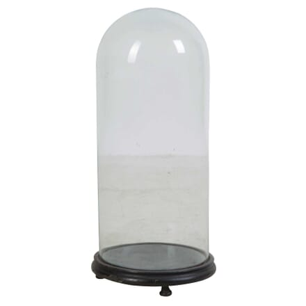 Victorian Glass Taxidermy Dome DA449762
