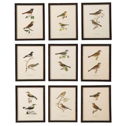 Collection of Swedish Birds WD6057545