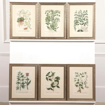 Set of 12 Weinmann Botanical Engravings WD6062032