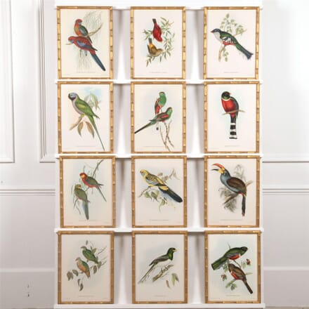A set of 12 Exotic Birds WD6062031