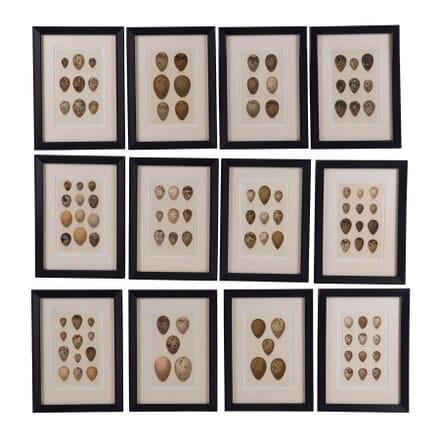 Set of Twelve 19th Century Chromolithographs of Eggs WD6060672