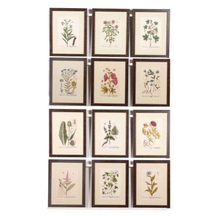 A Set of Twelve Elizebeth Blackwell Botanical Engravings WD6062363