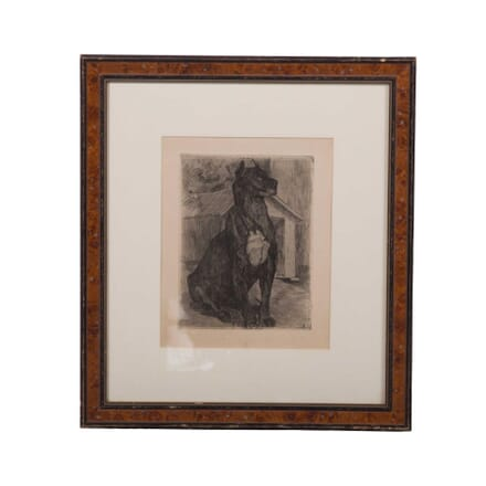 Early 20th Century Engraving of a Great Dane WD3759115