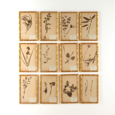Twelve Herbariums WD607745