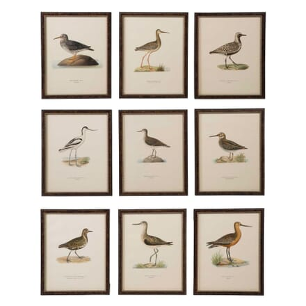 Collection of Swedish Birds WD6057535
