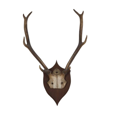 Pair of Large Antlers DA178099